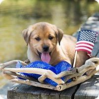 Adopt A Pet :: Aaron Burr - Glastonbury, CT