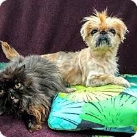 Adopt A Pet :: Augie - Pataskala, OH