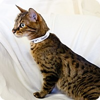 Adopt A Pet :: Benjie - Oakland Park, FL