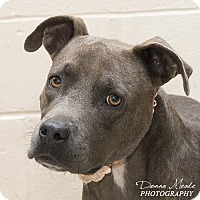 Adopt A Pet :: Madaline - Troy, OH
