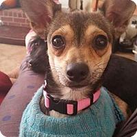 Adopt A Pet :: Pebbles - DeRidder, LA