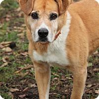 Adopt A Pet :: Cyrus - Lafayette, IN