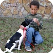 Border Collie/American Eskimo Dog Mix Dog for adoption in Weeki Wachee, Florida - Lynda