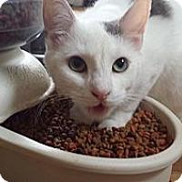 Adopt A Pet :: Mischief - Orillia, ON
