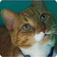 Adopt A Pet :: Big Red - Secaucus, NJ