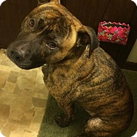 Adopt A Pet :: Bruno - La Crosse, WI