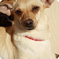Adopt A Pet :: FANTA - Elk Grove, CA