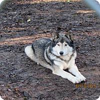 Adopt A Pet :: Chief Sr. - Ashland, OR