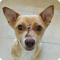 Adopt A Pet :: Sadie - San Francisco, CA