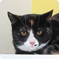 Adopt A Pet :: Beauty - Ridgway, CO