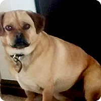 Adopt A Pet :: Kita - Ogden, UT