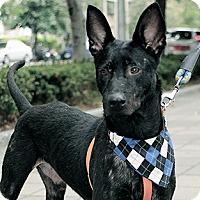 Adopt A Pet :: Tino - Surrey, BC