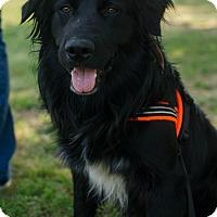 Adopt A Pet :: Ben - Greenwood, SC