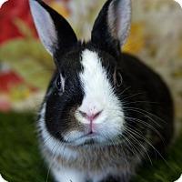Adopt A Pet :: Nibbler - San Diego, CA