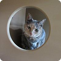 Adopt A Pet :: Penelope - Kingston, WA