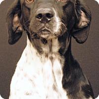 Adopt A Pet :: Wilder - Newland, NC