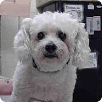 Adopt A Pet :: A014483 - Tavares, FL