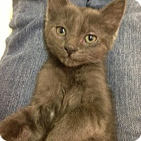 Adopt A Pet :: Adina - River Edge, NJ