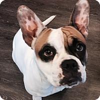 Adopt A Pet :: Tory - Lincoln, CA