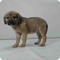 Adopt A Pet :: *COSETTE - Orlando, FL