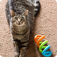 Adopt A Pet :: Siri - Morgantown, WV