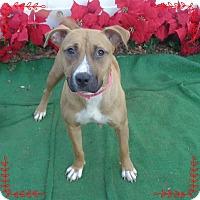 Boxer/Hound (Unknown Type) Mix Dog for adoption in Marietta, Georgia - ARLENE