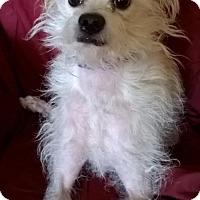 Adopt A Pet :: Muffin - Campbell, CA