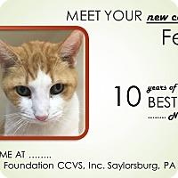 Adopt A Pet :: Fender - Saylorsburg, PA