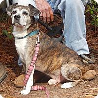 Adopt A Pet :: Buddy - Savannah, GA