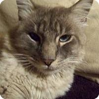 Adopt A Pet :: Earl Grey - Ennis, TX