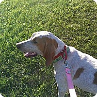 Adopt A Pet :: Daisy ~ Adoption Pending - Youngstown, OH