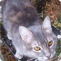 Adopt A Pet :: Meesha - Dallas, TX