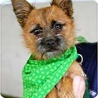 Adopt A Pet :: Tito - Mission Viejo, CA