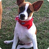 Adopt A Pet :: Jacky - Somers, CT