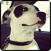 Adopt A Pet :: *URGENT Kiko - Montreal, QC