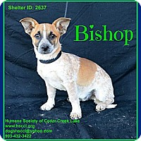 Adopt A Pet :: Bishop - Plano, TX