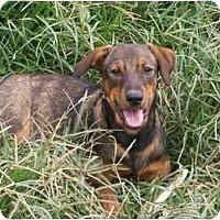 Adopt A Pet :: Finn - Albany, NY