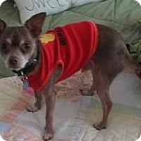 Adopt A Pet :: J.J. - O'Fallon, MO