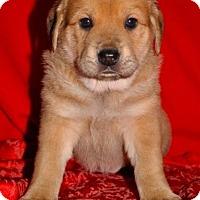 Adopt A Pet :: Skye - Austin, TX