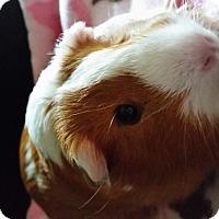 Adopt A Pet :: Queenie - Fullerton, CA