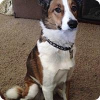 Adopt A Pet :: Gia - Pueblo West, CO