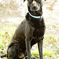 Adopt A Pet :: Zeus - Marina del Rey, CA