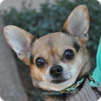 Adopt A Pet :: Jilly - Atlanta, GA