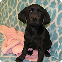 Adopt A Pet :: Gigi - Groton, MA