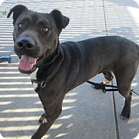 Adopt A Pet :: Shadow - Chula Vista, CA