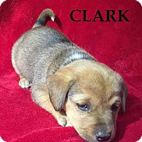 Adopt A Pet :: Clark - Batesville, AR