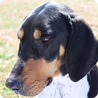 Adopt A Pet :: Darrel - Brattleboro, VT