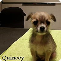 Adopt A Pet :: Quincey - Bartonsville, PA