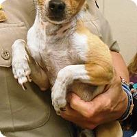 Adopt A Pet :: Lenny - Redding, CA