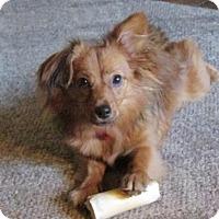 Adopt A Pet :: Skittles - Grand Rapids, MI